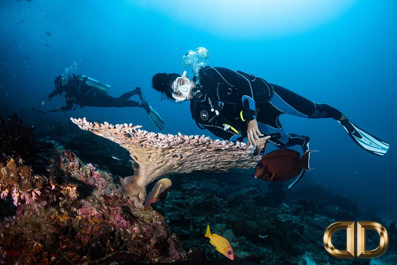 Discover Scuba Diving Courses Phuket