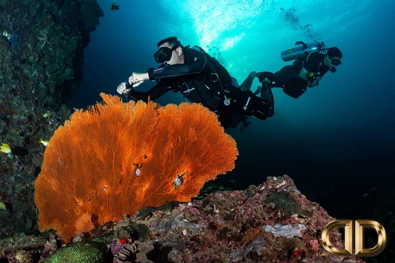 Luna Diving Phuket PADI Advanced Open Water Diver Course