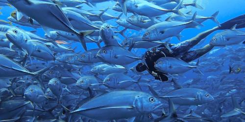 Luna Diving Scuba Diving Center Phuket