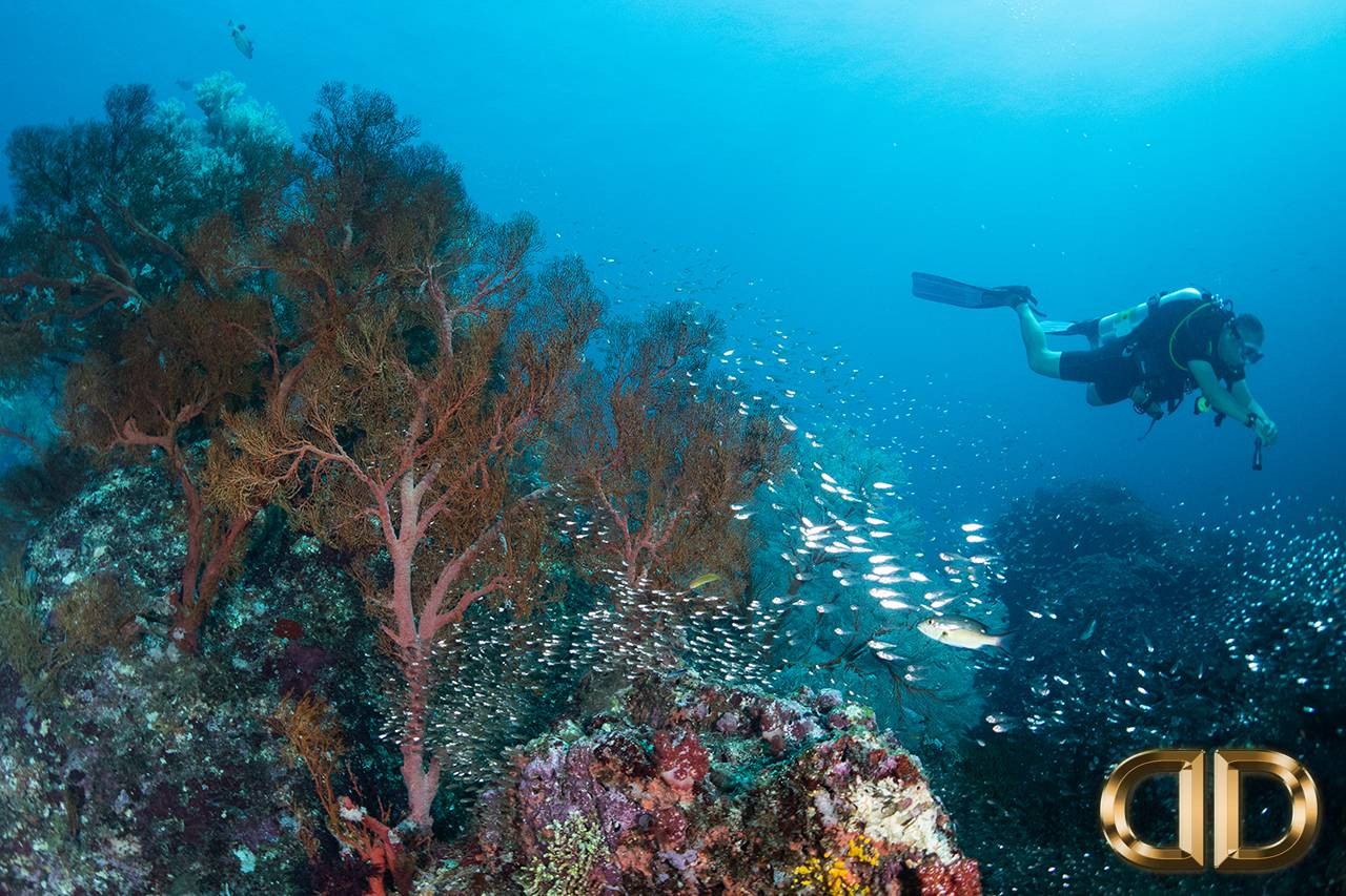PADI Discover Scuba Diving Thailand Luna Diving Phuket
