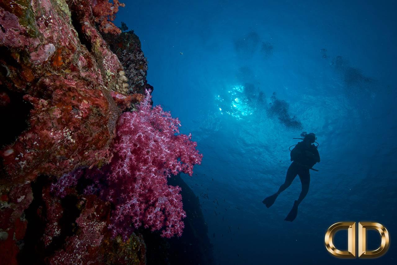 PADI Open Water Phuket Thailand Luna Scuba Diving