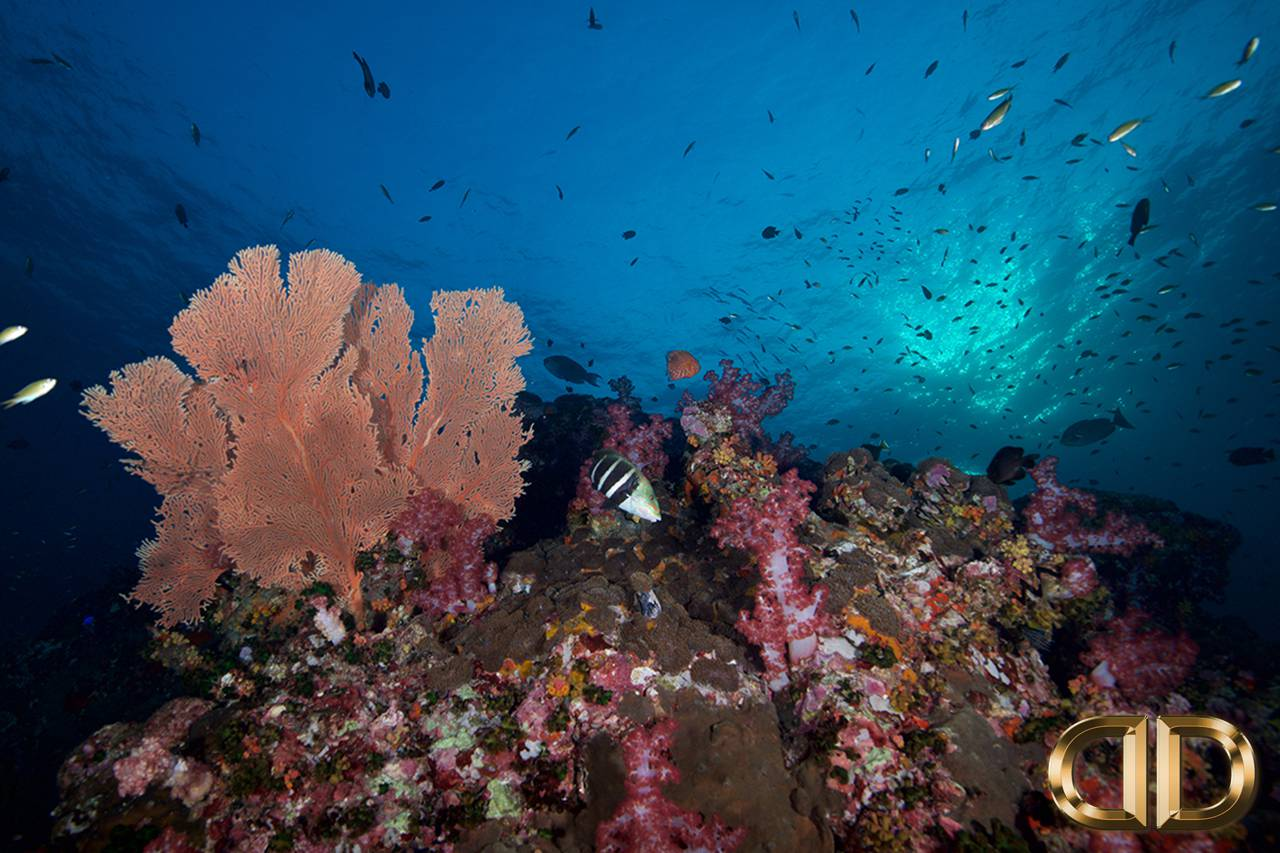 PADI Rescue Diver Phuket Luna Diving Thailand
