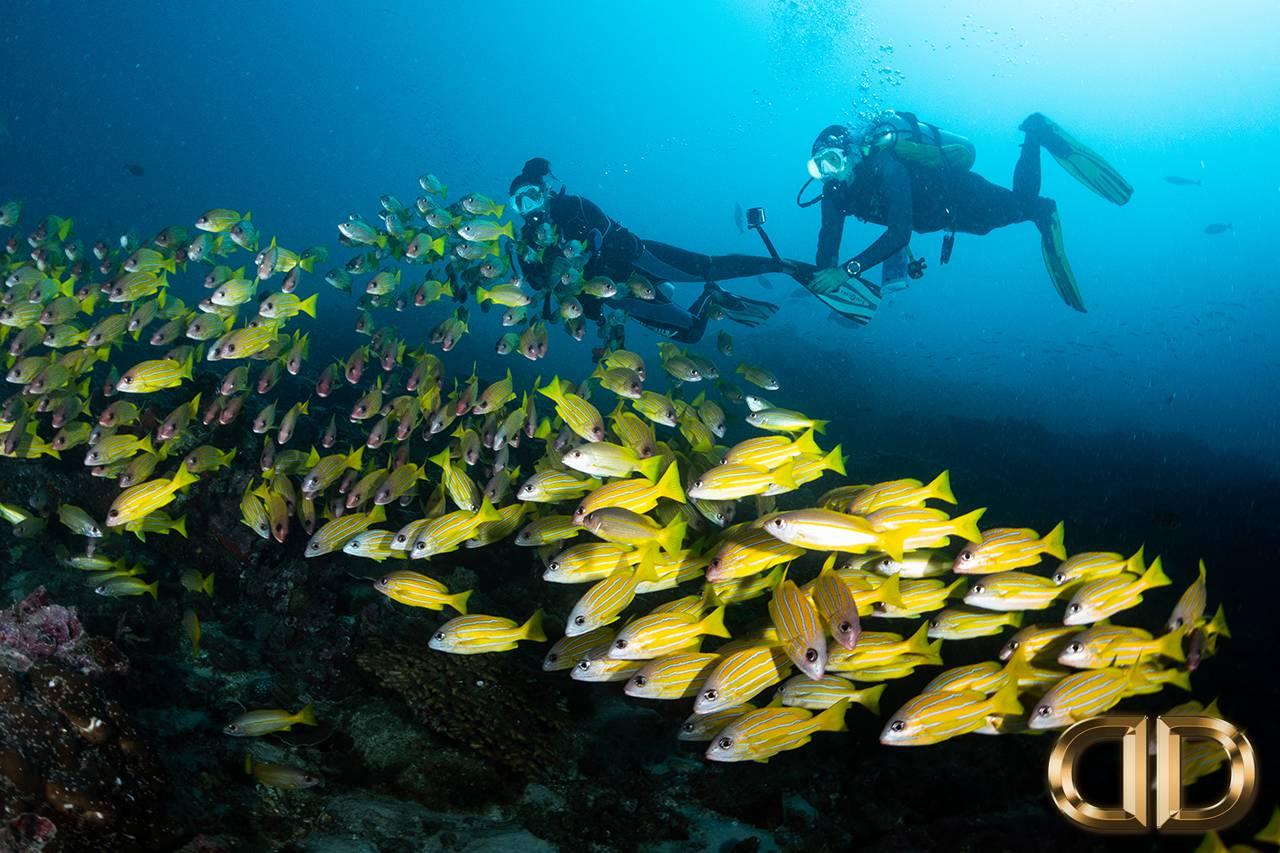 Scuba Diving Courses Phuket Thailand